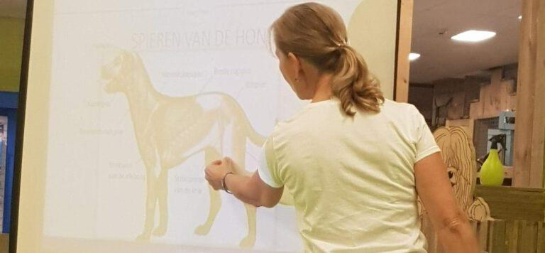 workshop honden massage